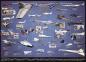 Пазл Америанские самолеты разведчики 1000 эл 6000-0248 0