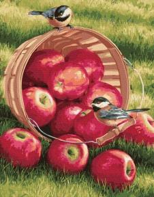 Картина по номерам Яблоки для птичек 40 х 50 см Brushme