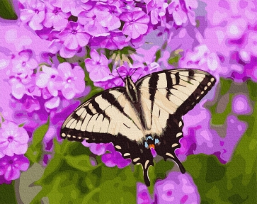 Картина по номерам Бабочка в цветах 40 х 50 см Brushme