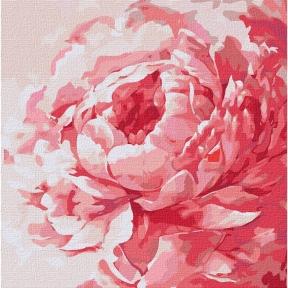 Картины по номерам Розовый пион 40 х 40 см КНО2943 Идейка