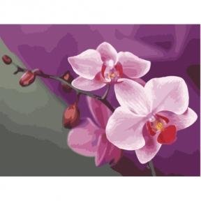 Картина по номерам Розовые орхидеи 50 х 40 см КНО1081 Идейка