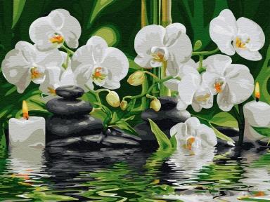Картина по номерам Спокойствие орхидей 40 х 50 см Brushme