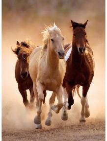 Пазл Бегущие кони 1000 эл 39168