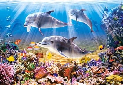 Пазл Дельфины 500 эл. b51014