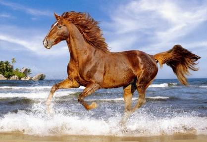 Пазл Лошадь на пляже 500 эл 51175