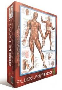 Пазл Мышцы человека 1000 эл 6000-2015