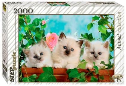 Пазл Котята с розой 2000 эл 84018