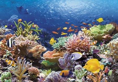Пазл Рыбы коралловых рифов 1000 эл. c101511